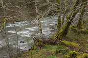 The Wilson river in the Northern Oregon coast range, part of the Tillamook State Forest. Photographed in early March. © Michael Durham.