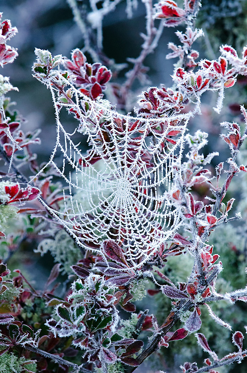 A spiders web is adorned with frost in Bumthang, Bhutan.