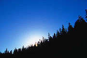 Tree line at sunrise or sunset.