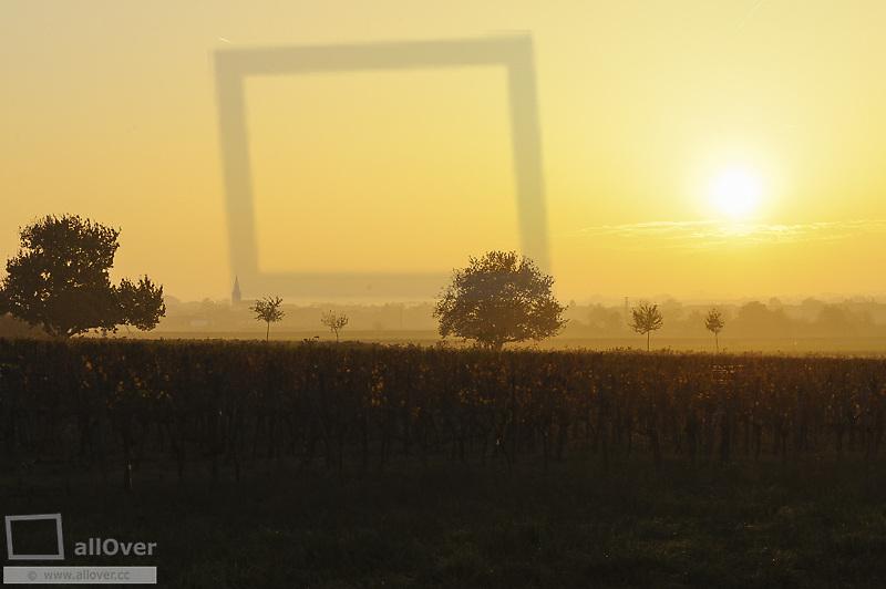 Autumn in vine yard, Austria, Burgenland, Northern Burgenland