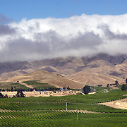The Awatere Valley is the smaller of two sub-regions within the famous Marlborough wine region in the South Island, New Zealand. It lies south-east of the region's main wine-growing area, the Wairau Valley....The Marlborough wine region is New Zealand's largest wine producer. The Marlborough wine region has earned a global reputation for viticultural excellence since the 1970s. It has an enviable international reputation for producing the best Sauvignon Blanc in the world. It also makes very good Chardonnay and Riesling and is fast developing a reputation for high quality Pinot Noir. Of the region's ten thousand hectares of grapes (almost half the national crop) one third are planted in Sauvignon Blanc. Marlborough, New Zealand, 12th February 2011. Photo Tim Clayton