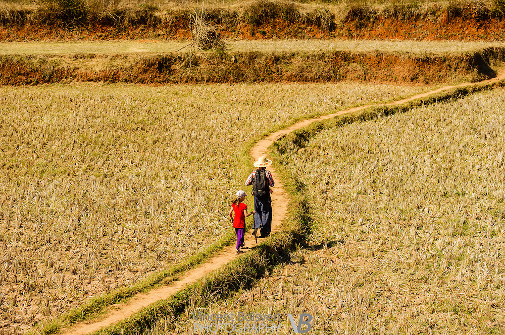 a young girl and a local guide walking across a rice field