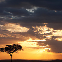Africa, Kenya, Masai Mara Game Reserve, Lone Acacia Tree in silhouette at sunset on savanna