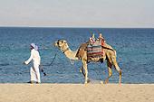 Animals - Red Sea - Egypt