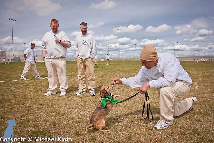 Two handlers look on while a third works with Sparky in the exercise field.  Pet pictures by Michael Kloth.