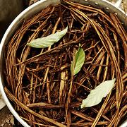 Préparation de l'ayahuasca. Réduction au feu de bois d'un mélange de feuille et de liane.