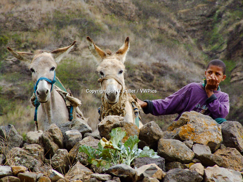 A boy and his two donkeys in the Cova de Paul caldera on Santo Antao, Republic of Cabo Verde, Africa.