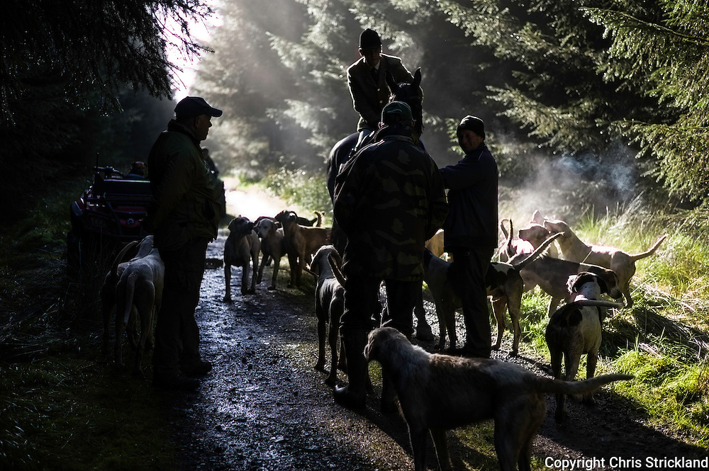 The Jedforest Hunt makes it way up a forestry track during a mornings autumn hunting.