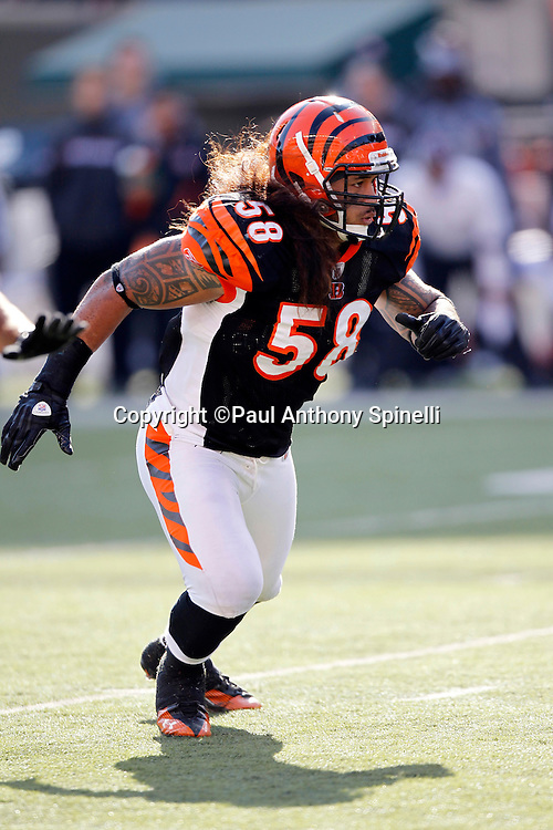 Cincinnati Bengals linebacker Rey Maualuga (58) makes a move during the NFL week 8 football game against the Miami Dolphins on Sunday, October 31, 2010 in Cincinnati, Ohio. The Dolphins won the game 22-14. (©Paul Anthony Spinelli)