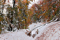 Autumn's snowfall in beech forest, Bieszczady National Park, Poland