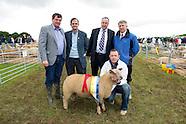 SHEEP 2012