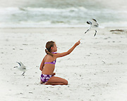 Young Girl Feeding the Seagulls at Fort Myers Beach, Florida