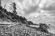 Sitka spruce driftwood and rocks on Indian Beach at Ecola State Park, Oregon
