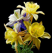 Floral Portfolio III