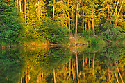 Last light on trees of the boreal forest<br />Ear Falls<br />Ontario<br />Canada