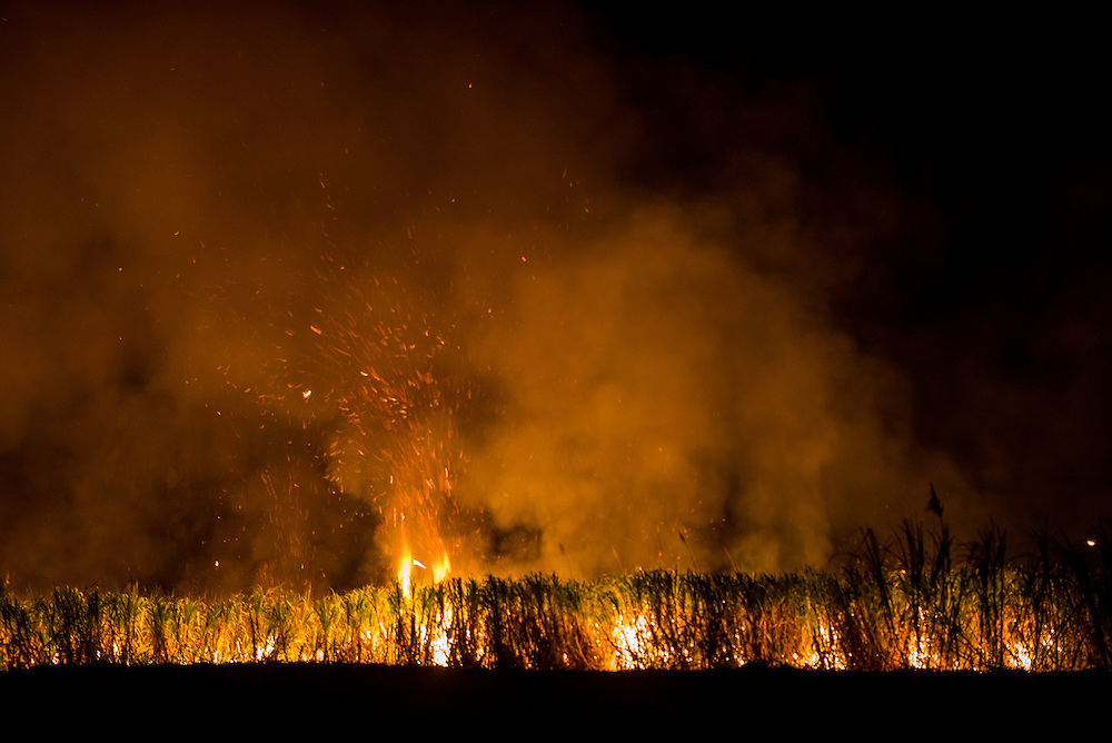"Jan. 11, 2014. Cane fields are set to burn at night when the temperature is cooler and workers are not present. Burnt cane, or ""cana muerto"" (dead cane) is procesed into brown sugar or rum, while green cane is processed into white sugar."