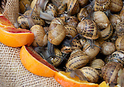 Snails at the Farmer's Market in Ortigia