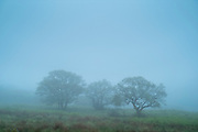 Trees in a misty landscape scene in Scotland