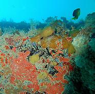 vieques, puerto rico :: underwater (2010)