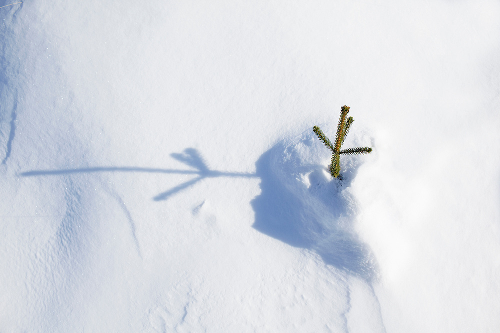 A tree reaching out of the snow