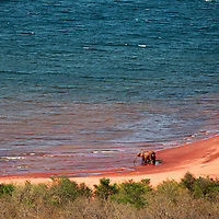 Africa, Zimbabwe, Bumi Hills. Elephant on shore of Lake Kariba.