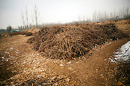 Stalks from harvested cotton sit piled up in in a field in the town of Huji in the province of Shandong, China, Friday, Jan. 28, 2011. Despite record cotton prices last year, some farmers are storing their harvest of cotton and are holding out for even higher prices, hoping to help overcome higher costs of fertilizer and labor, which have both risen 20% in the past year..CREDIT:Keith Bedford for The Wall Street Journal.Slug: COTTON