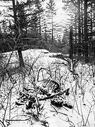Sugar and elk carcass on Estes Lake trail