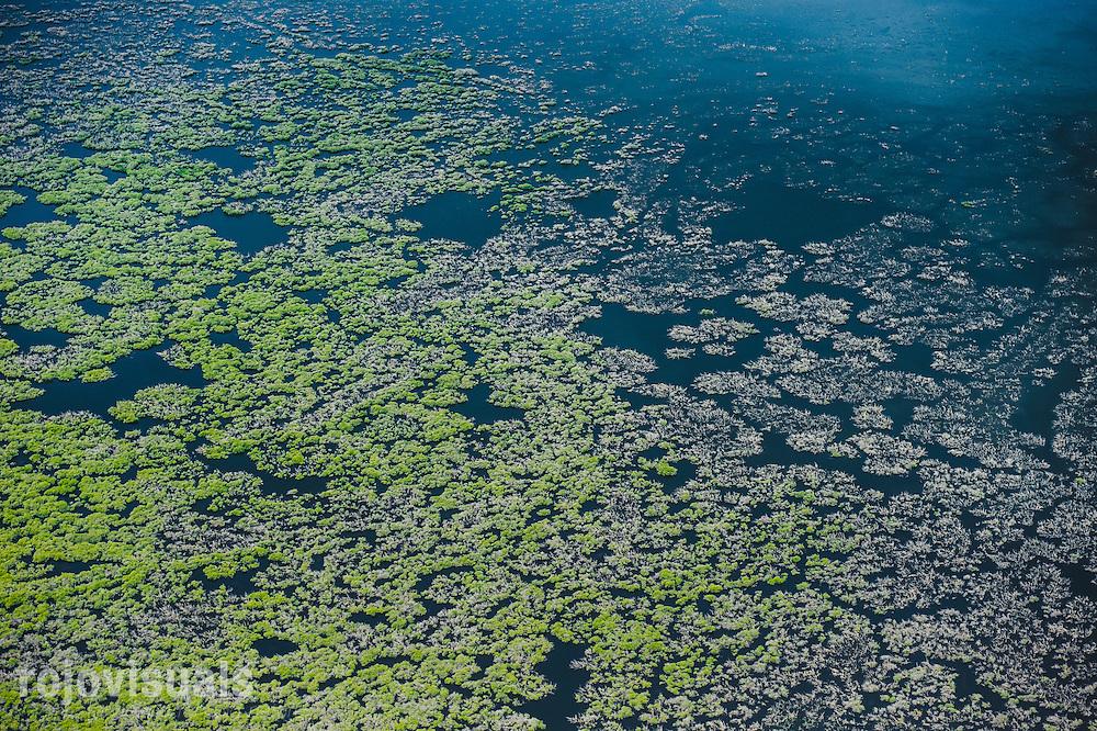 Aerial view of dead mangrove forests<br /> Marismas Nacionales Biosphere Reserve, Nayarit<br /> Mexico