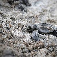 Panama-Tortuguias