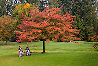 NUMANSDORP - Hole 8 . met Japanse Esdoorn .  Golfclub Cromstrijen. COPYRIGHT KOEN SUYK