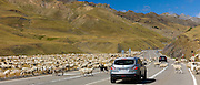 Mountain sheep and goats roaming in road delay Nissan Qashgai 4x4 car in Val de Tena, the Spanish Pyrenees, Northern Spain