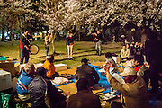 People gather under the cherry trees for a late evening picnic. Some take out some instruments like bamboo flutes and drums ans start playing traditional songs.