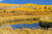 Autumn colors surround a wetland. Prince Albert National Park, Saskatchewan, Canada