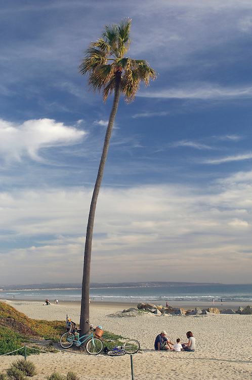 Family picnic under Palm Tree, Coronado Beach, San Diego, California, United States of America