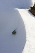 Snow Ridge, Mount Wellington Forest Park - Tasmania