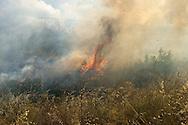 Roma 28 Giugno 2013<br /> Incendio di sterpaglie in via Casilina al civico 900, ex campo rom
