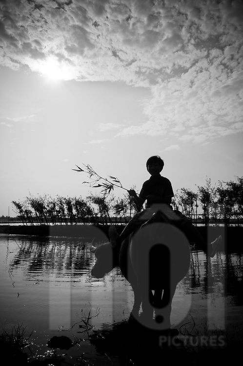 Silhouette of a young Vietnamese boy riding his buffalo in a river, Hue area, Vietnam, Southeast Asia