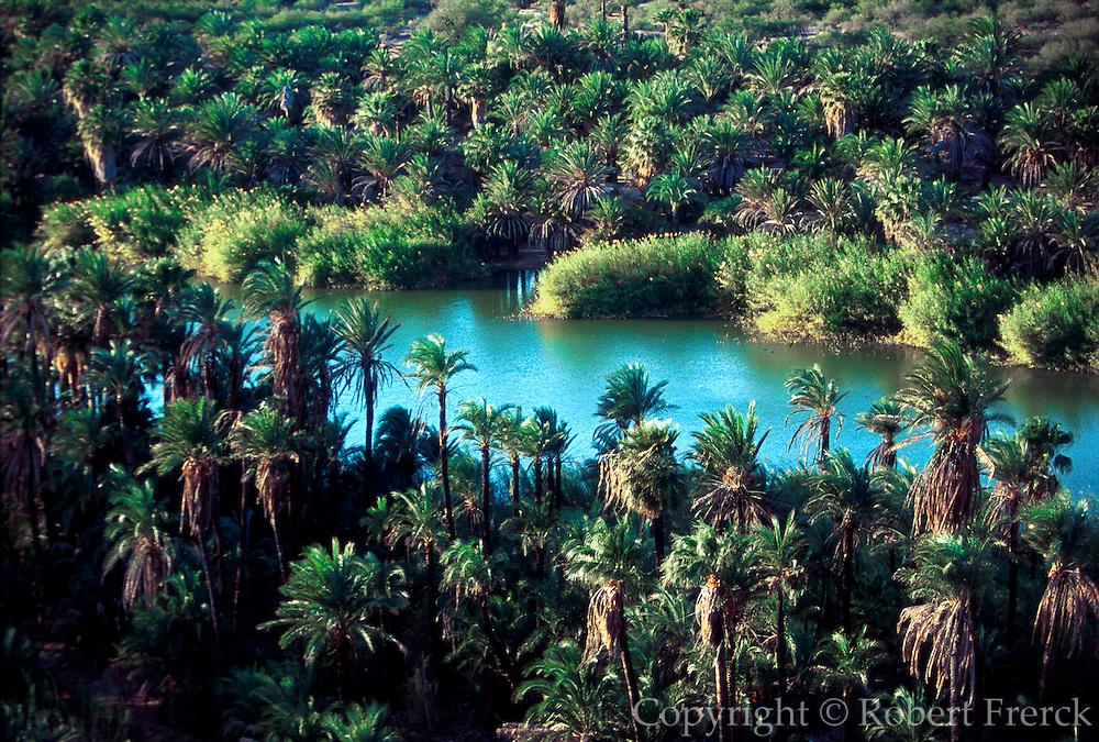 MEXICO, BAJA CALIFORNIA SOUTH Arroyo San Ignacio with date palms planted by the Spanish around their mission 200 years ago