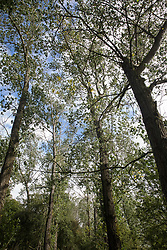 A view of trees at Calvert Jubilee Nature Reserve on 27 July 2020 in Calvert, United Kingdom. On 22nd July, the Berks, Bucks and Oxon Wildlife Trust (BBOWT) reported that it had been informed of HS2's intention to take possession of part of Calvert Jubilee nature reserve, which is home to bittern, breeding tern and some of the UK's rarest butterflies, on 28th July to undertake unspecified clearance works in connection with the high-speed rail link.