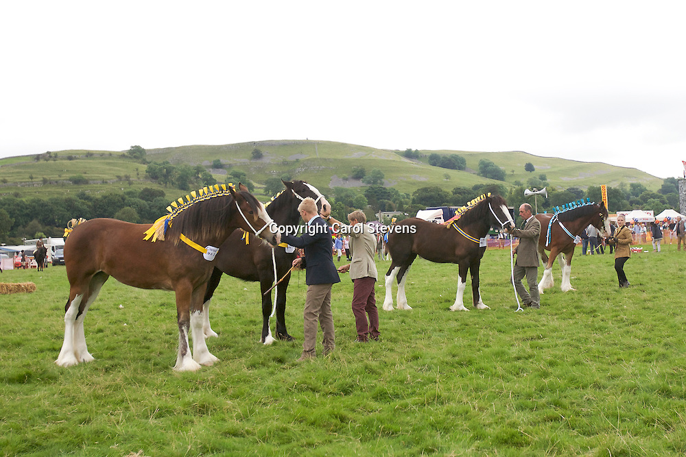 Yearling Class in final order