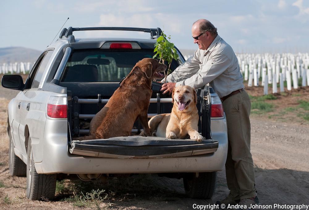 Dick Boushey's new vineyard planting, Prosser, Washington