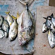 Zihuatenejo Fish Market / Zihuatenejo, Mexico
