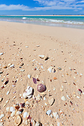 Shells on a sandbank at Willie Creek, north of Broome
