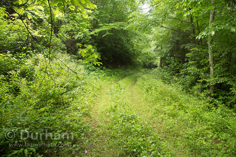 An overgrown road in the Cherokee National Forest, Tennessee.
