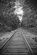 Dead Rail road tracks disappearing into the woods of Asbury New Jersey.