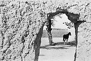 House, Horses in Courtyard, Kano, Nigeria, Africa, 1937
