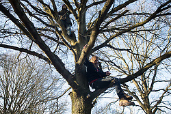 Harefield, UK. 18 January, 2020. Earth protectors perch in a tree at the Colne Valley wildlife protection camp. Activists from Extinction Rebellion, Stop HS2 and Save the Colne Valley today reoccupied the camp from which all but two activists had been evicted by bailiffs the previous week on the second day of a three-day 'Stand for the Trees' protest in the Colne Valley timed to coincide with tree felling work by HS2. 108 ancient woodlands are set to be destroyed by the high-speed rail link.