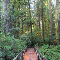 Bridge in Simpson Reed Grove, Redwoods National Park, CA