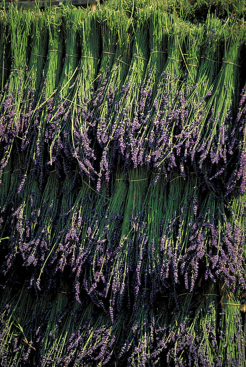 France, Provence, cut lavender for sale at market