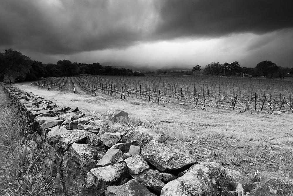 Vineyard near Stag's Leap, Napa Valley, California.